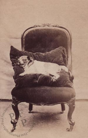 Dog on an armchair